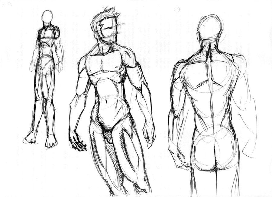 anatomia muscular tronco - Buscar con Google