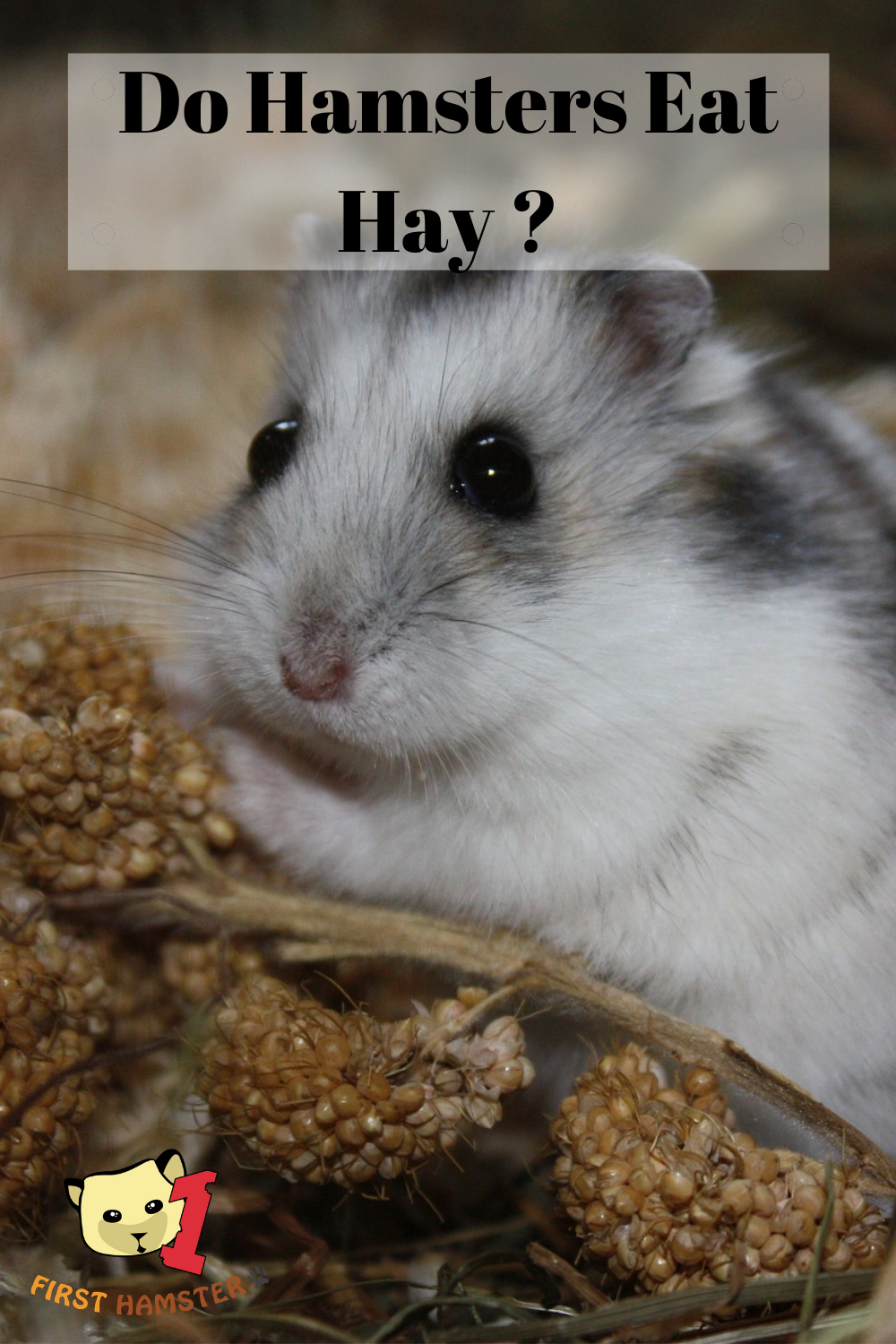 Do Hamsters Eat Or Need Hay ? Extra Treats For Your Hamster