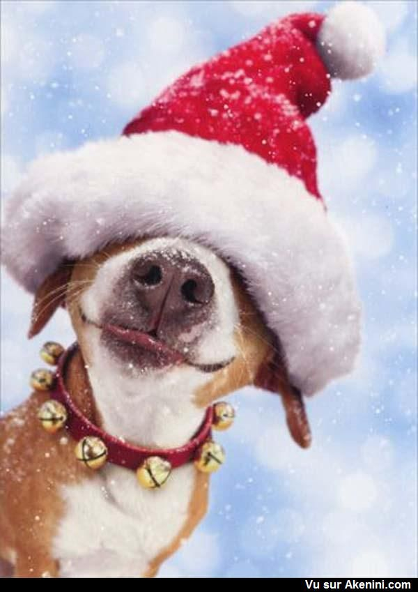 Chien De Noel Photos Fun Noël | Chien noel, Animal domestique, Animaux les plus