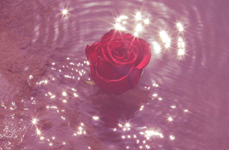 Pinterest⇝≫skylarmckellar Insta⇝≫sky.mckellar I always follow back   Aesthetic roses, Pink ...