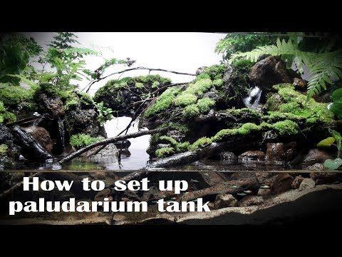 How to set up paludarium stream forest - Thiết lập bể bán ...