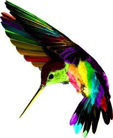 Hummingbird Png Tropical Art Hummingbird Free Pictures