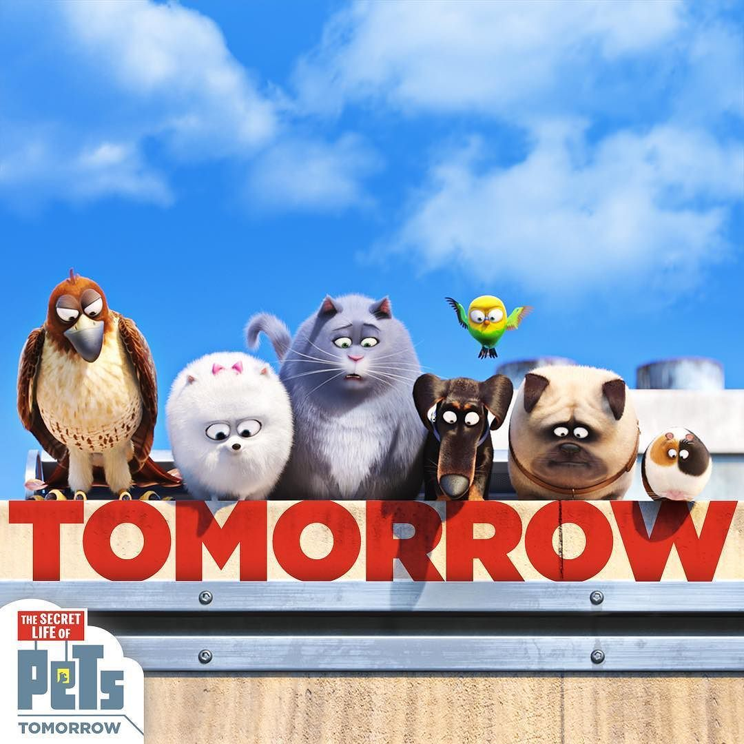 Are you and your cute friends ready for...   Pets movie. Secret life of pets. Cat movie