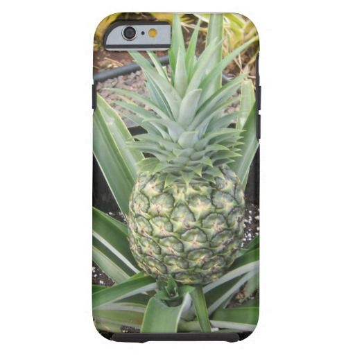 pineapple plant http://www.zazzle.com/iphone_6_pineapple-179342460679767440