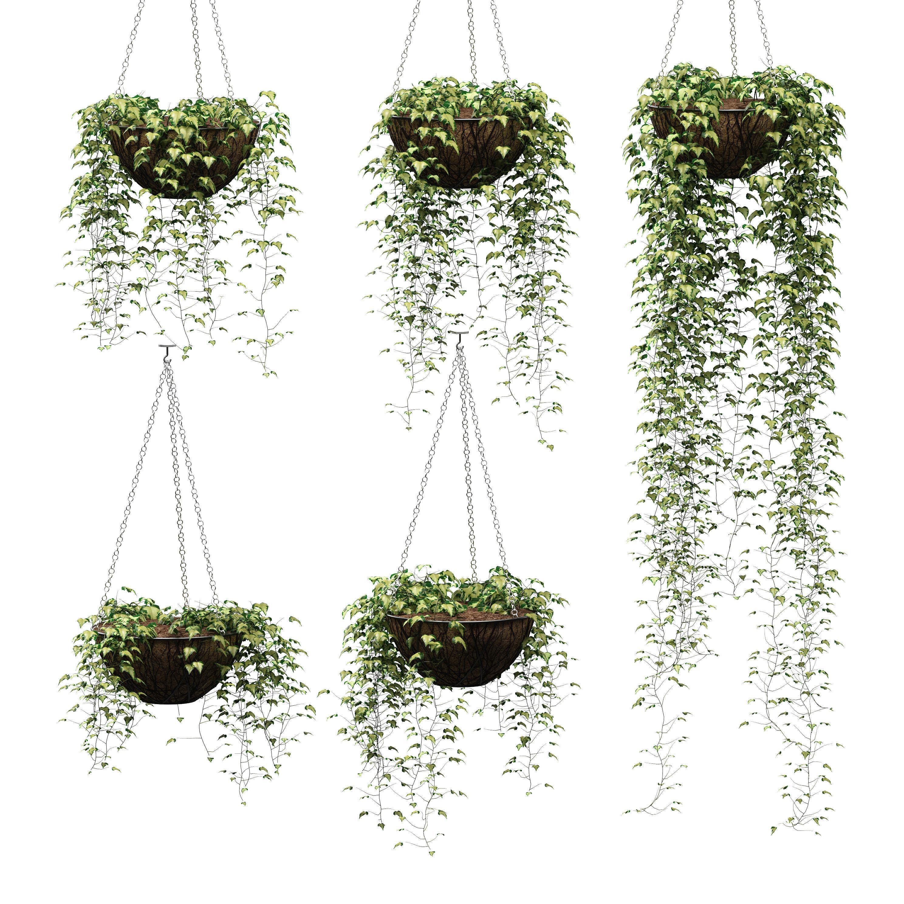 Hanging Ivy In Pots 5 Models 3d Model Hanging Flower Pots Hanging Potted Plants Flower Pots