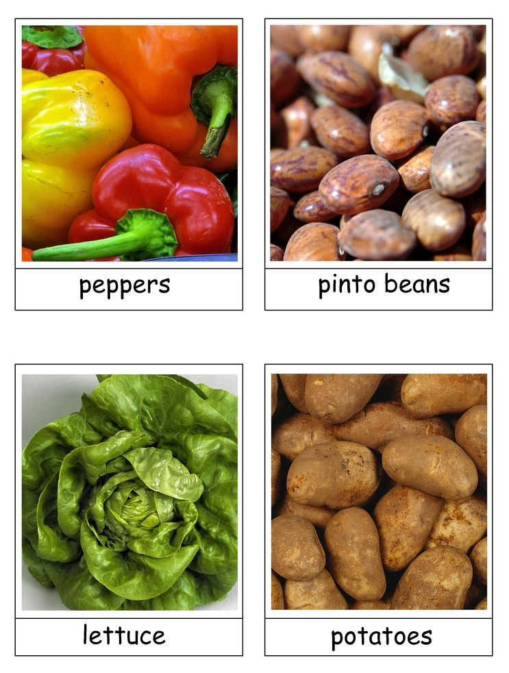 Garden Vegetable Flash Cards Spring Botany Unit Fruit And Veg