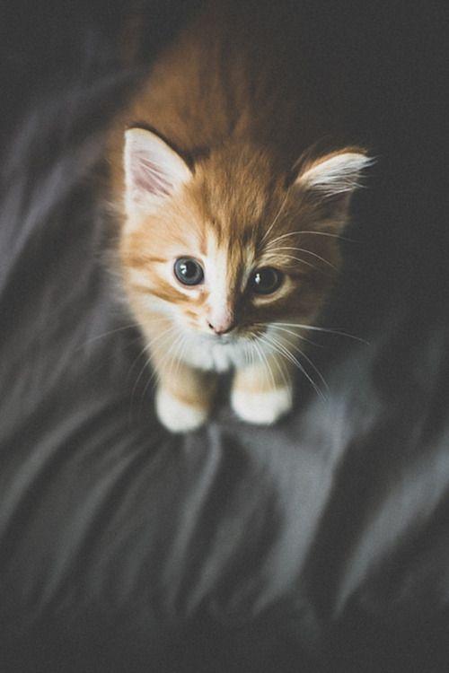 Pin Di Serena Su Cats Pinterest Animales Gatos E Animales Bonitos