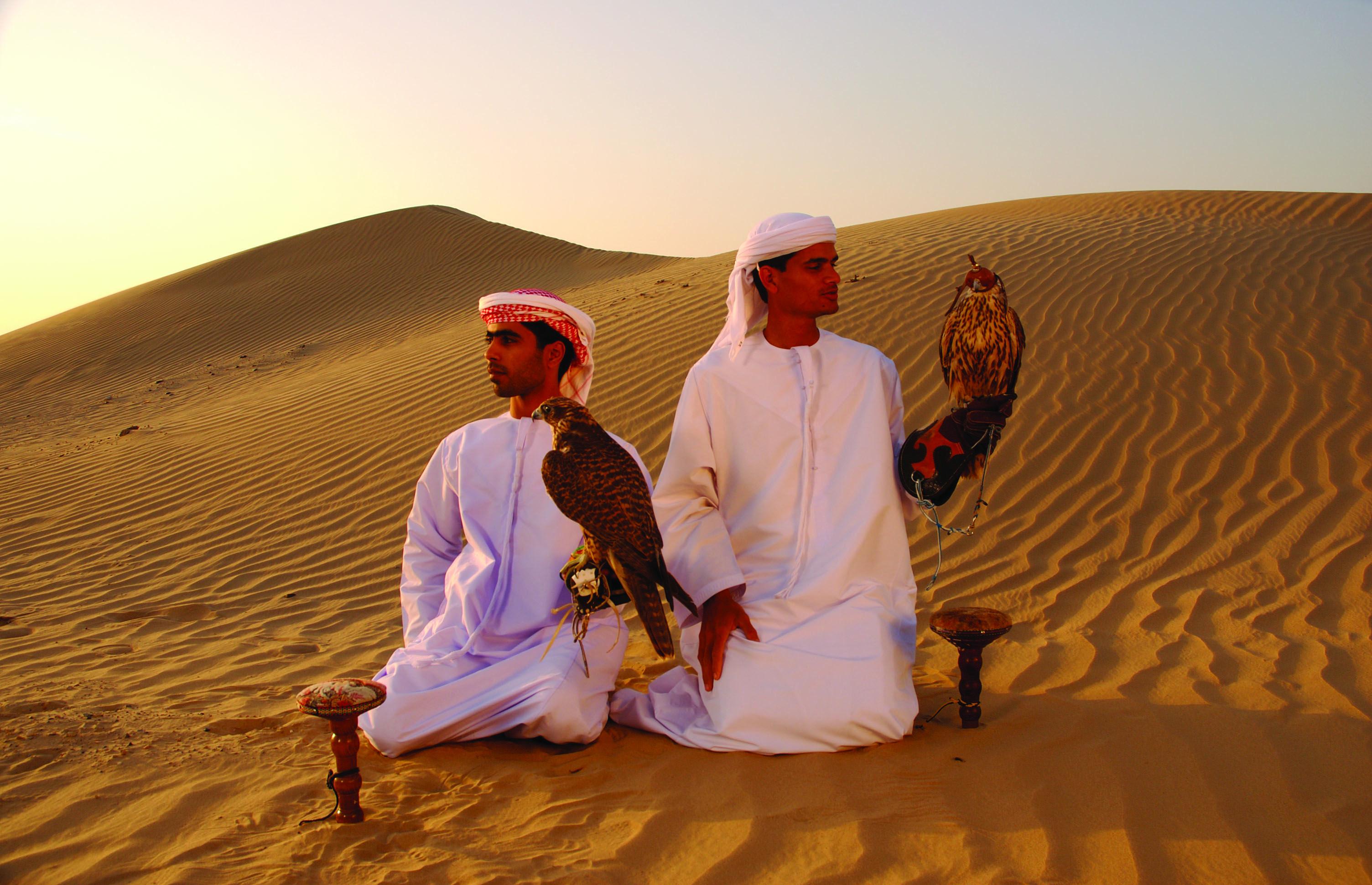 Falcons in the desert