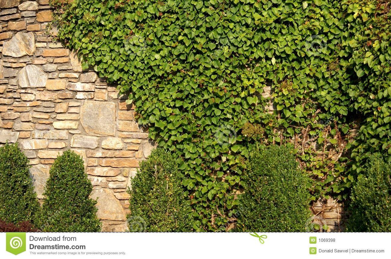 Pin By Ramona Iacono On Trees And Bushes Vine Wall