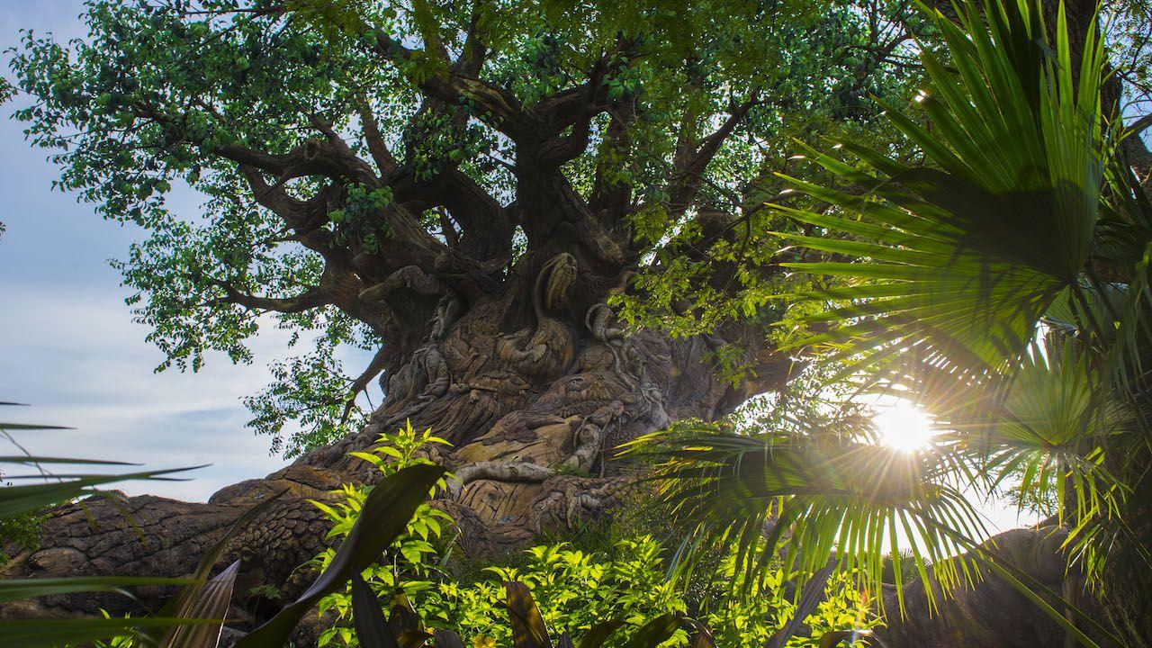 Tree of Life at Walt Disney World