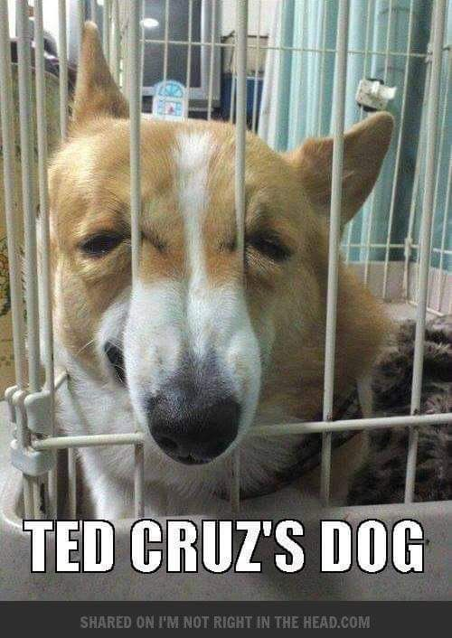 Ted Cruz Memes More Funny Animals Funny Dogs Cute Animals