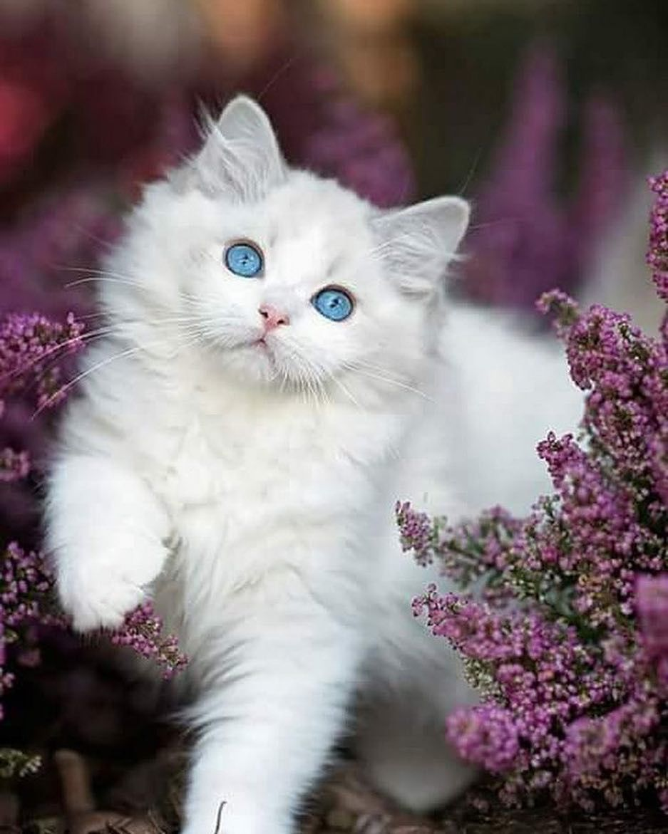 Pin by Courtney Miller on cats Kittens cutest, Cute cats