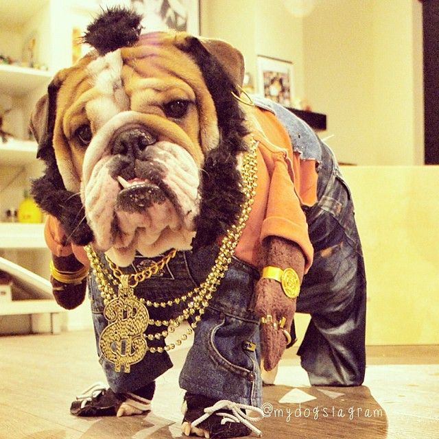 Milo's #throwback costume from last yr as Mr. T doggie dog ...