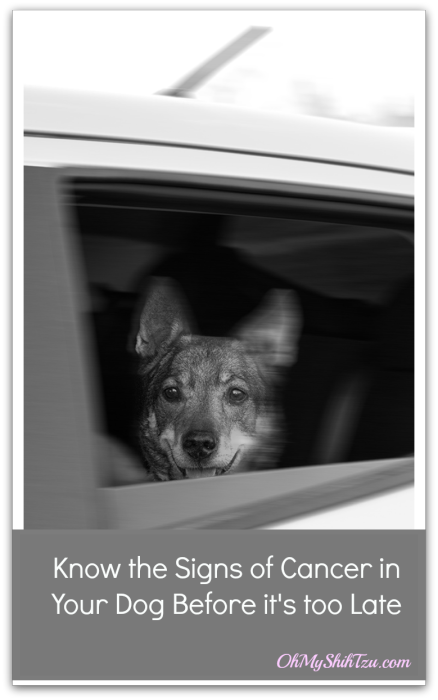 Cancer in Dogs:  Know the signs of Cancer in Dogs, before it's too late!!!