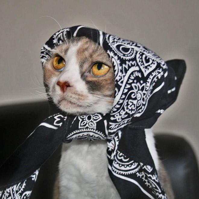 Babushka Cats That Look Like Old Russian Ladies In 2021 Cats Beautiful Cats Cute Cats
