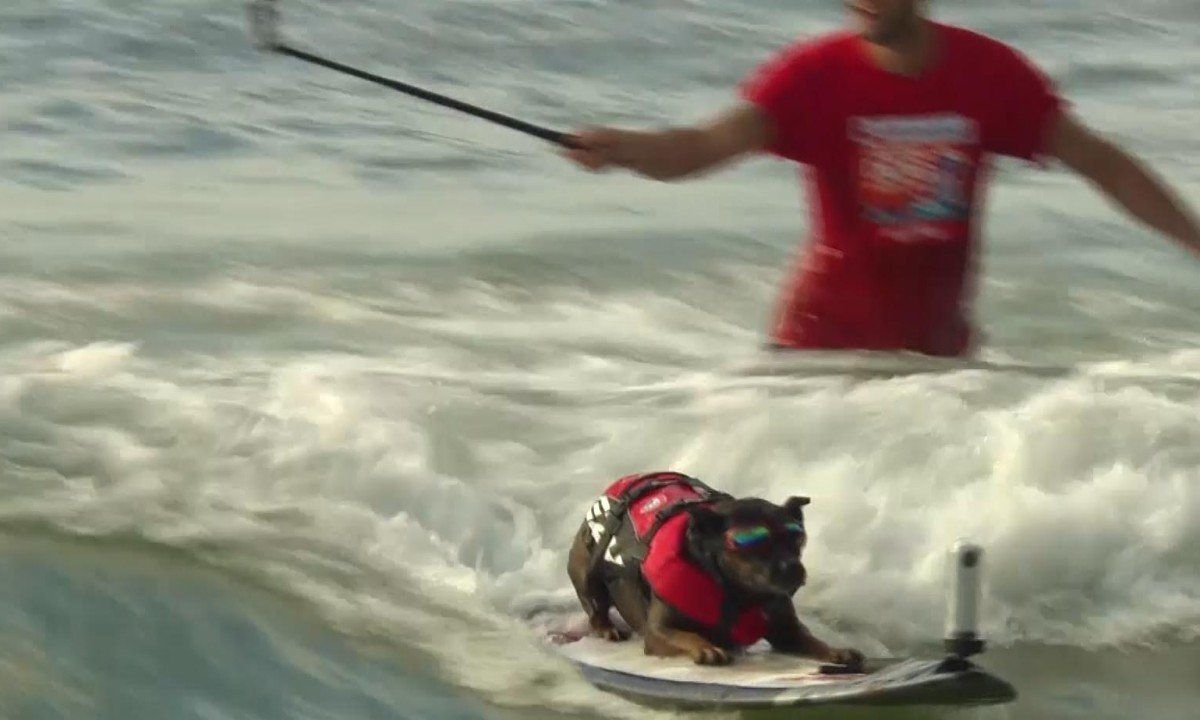 Dogs take centre stage in world's biggest surfing festival – video | Sport | The Guardian