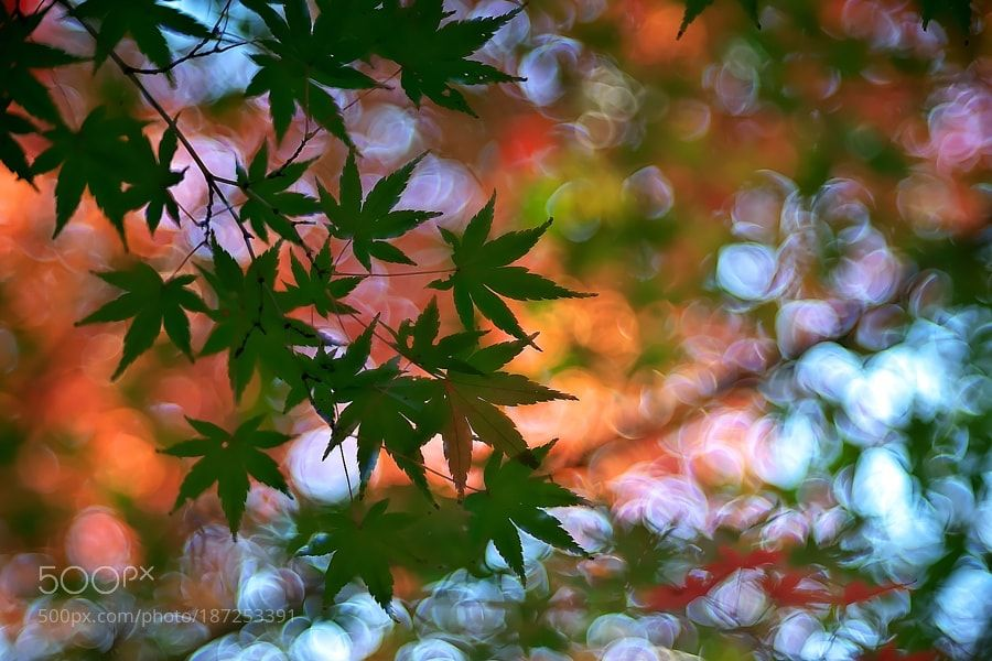 Green leaves by Akiatoshiaki