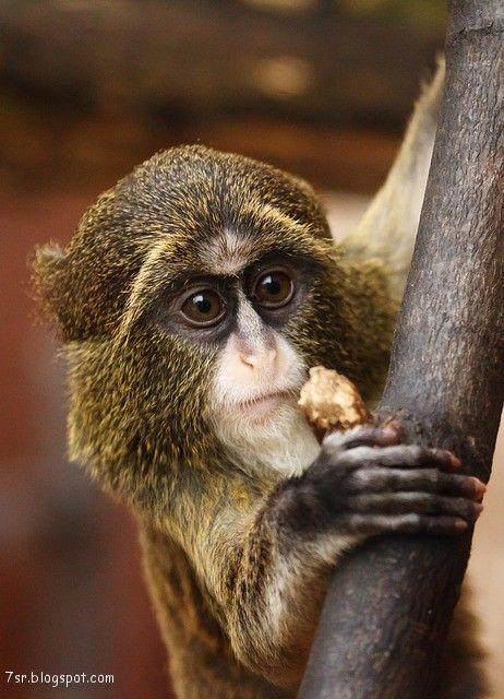 صور قرد Animals Africa Animals Cute Monkey