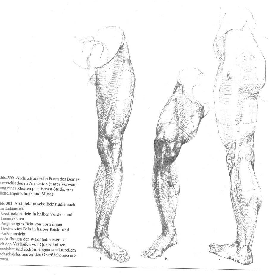 Wunderbar Fußanatomie Galerie - Menschliche Anatomie Bilder ...