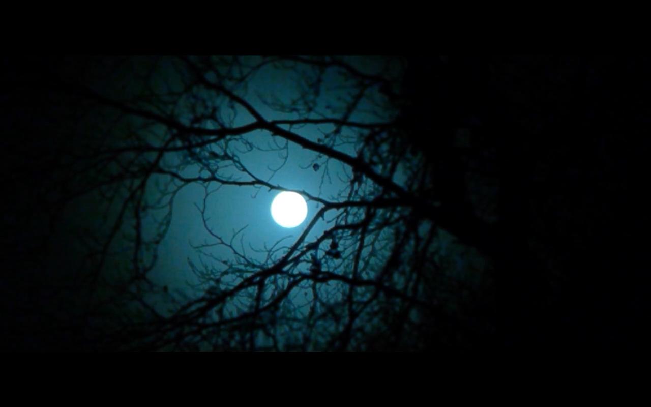 I caught a moon between trees. #tree