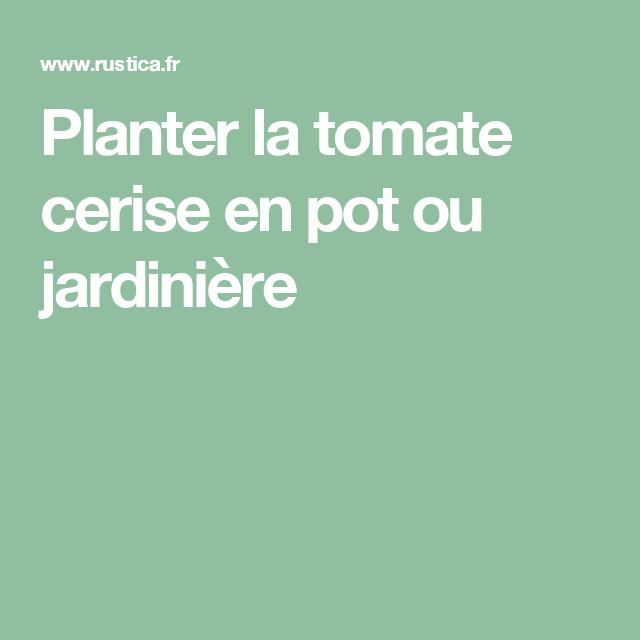 Planter la tomate cerise en pot ou jardinière | Tomates ...