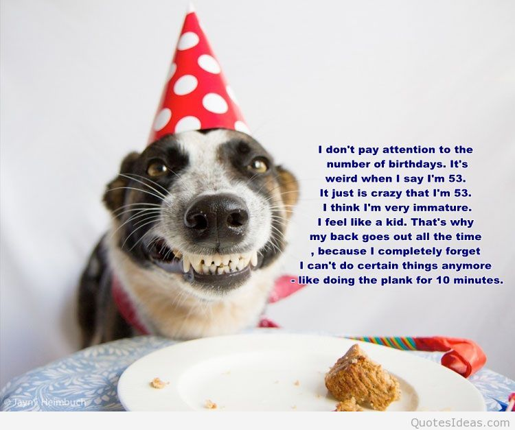 Birthday Fun Dog Quotes Quotesgram By Quotesgram Funny