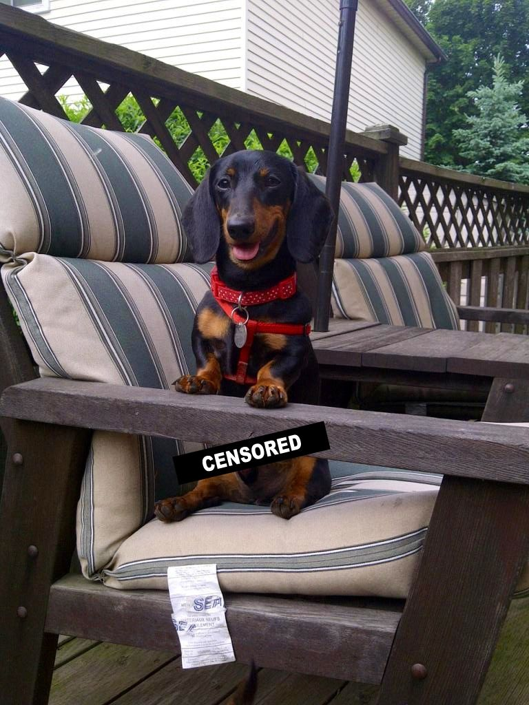 Please Don T Look At My Wiener Cuteness Overload Dachshund