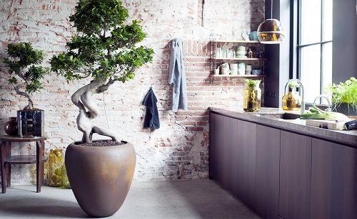 Grote Badkamer Ideeen : Planten trends grote planten hippe kamerplanten in het interieur