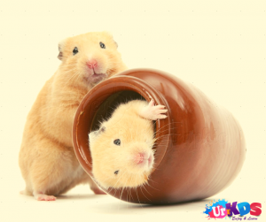 Hamster Pet For Kids Animals For Kids Best Pets For Kids Best Small Pets