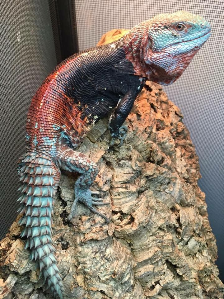 Pin By Juan Baridon On Ravishing Reptiles Cute Reptiles Creepy Animals Amphibians