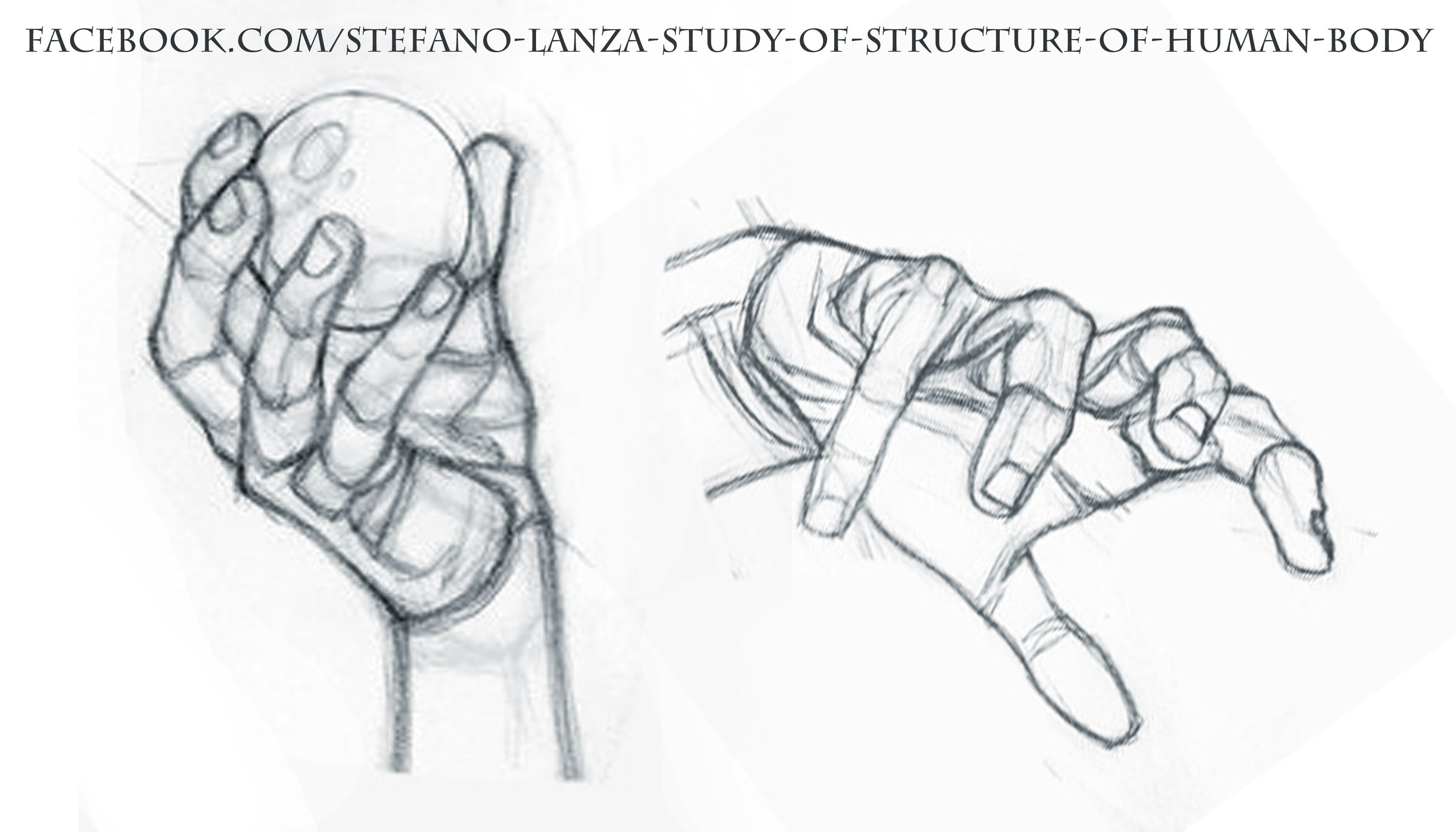https://www.facebook.com/Stefano-Lanza-Study-of-structure-of-human ...