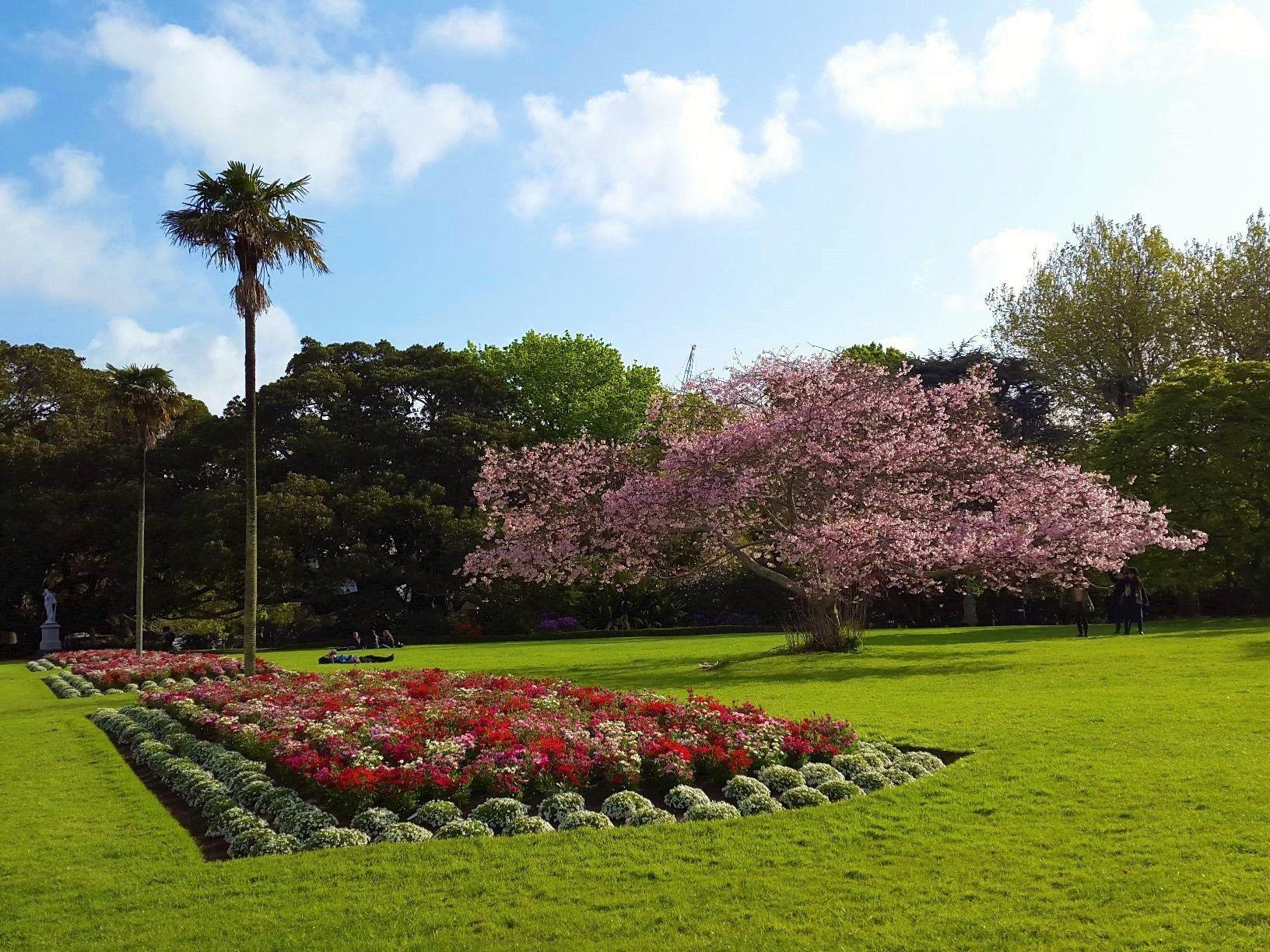Blooming Sakura In Albert Park Auckland New Zealand Albert Park Outdoor Outdoor Decor