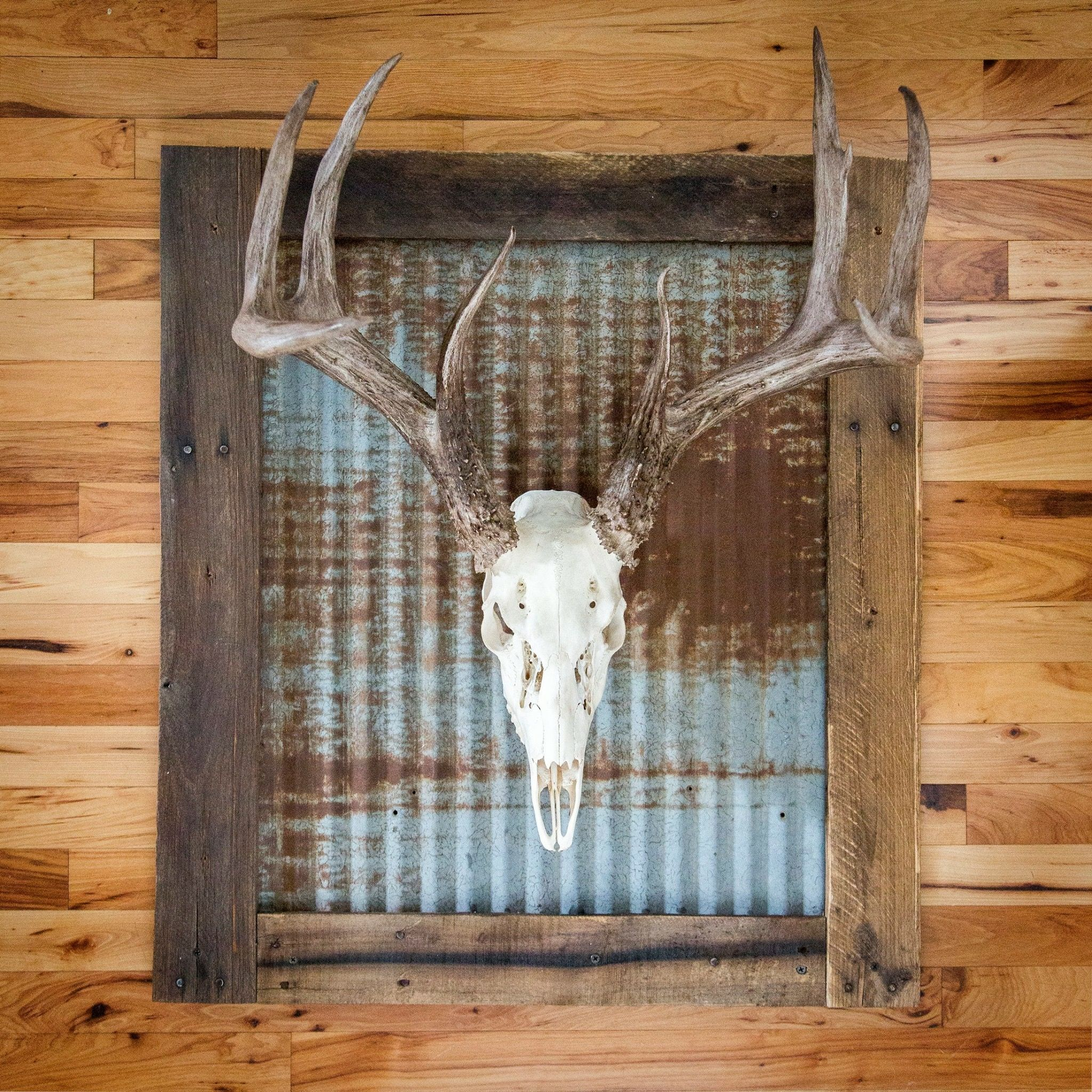 Whitened skull with rustic tin wall frame. Includes wall mounting ...