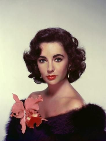 Photo: ELIZABETH TAYLOR in the 50's (photo) : 32x24in