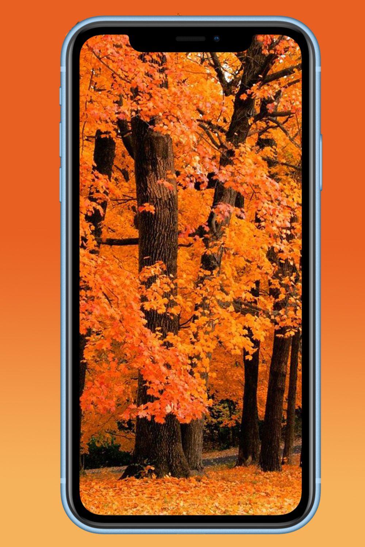 Iphone X Wallpaper Notch Hide In 2020 Iphone Iphone Wallpaper Wallpaper