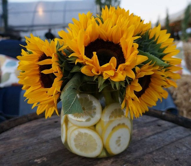 Sunflower centerpieces for events farm to table none such