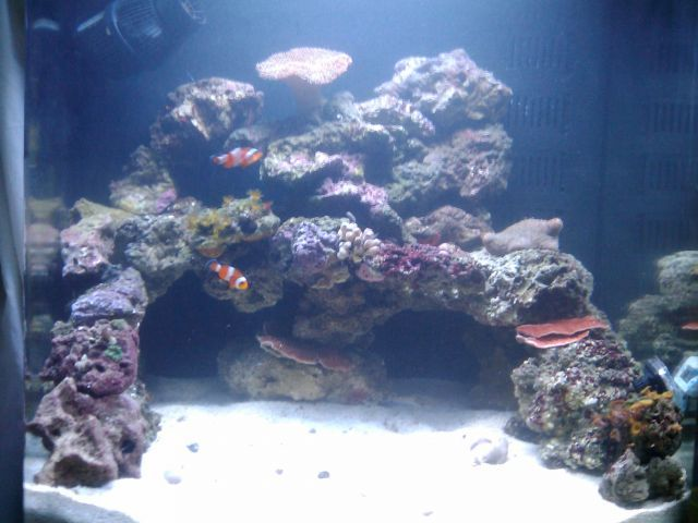 Related Image Reef Tank Aquascaping Saltwater Fish Tanks Saltwater Aquarium Setup