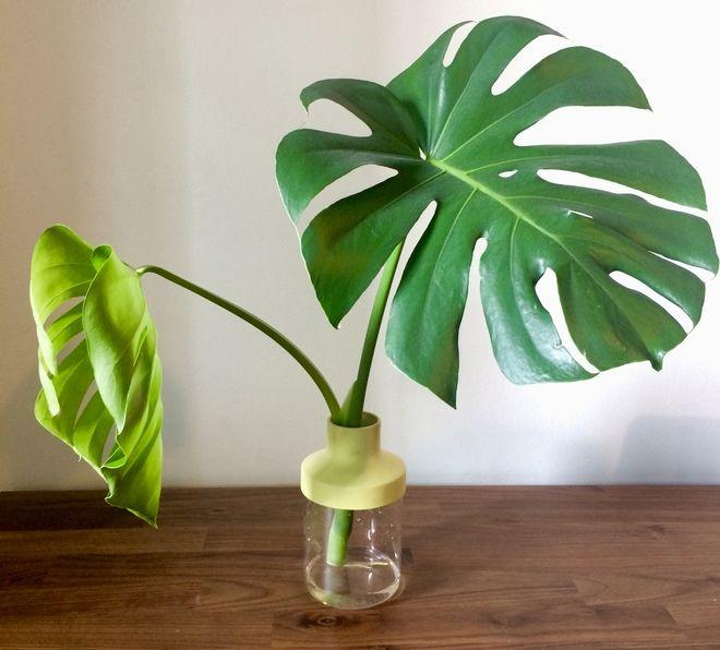 Apartment Garden Indoor Easy Diy
