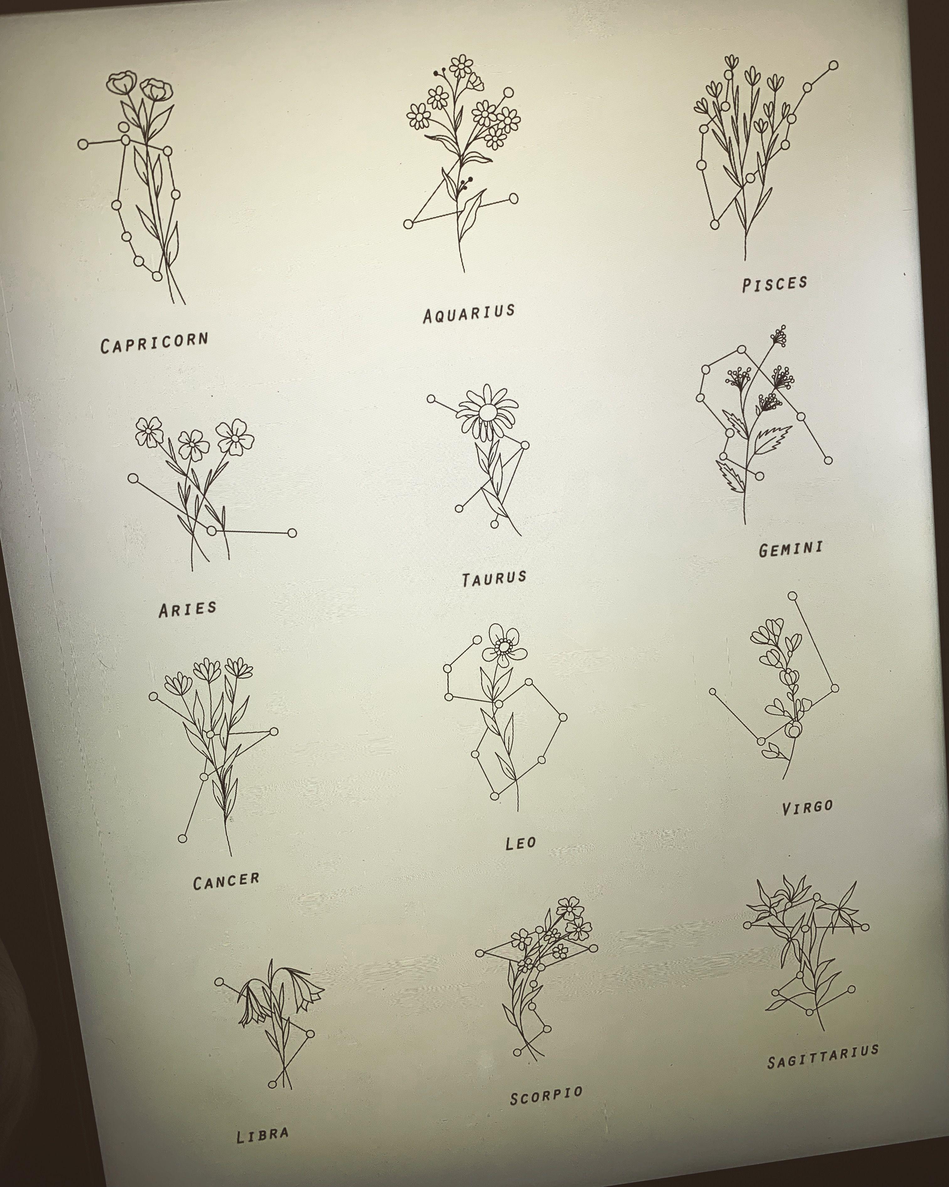 Wildflower de la estrella signos �