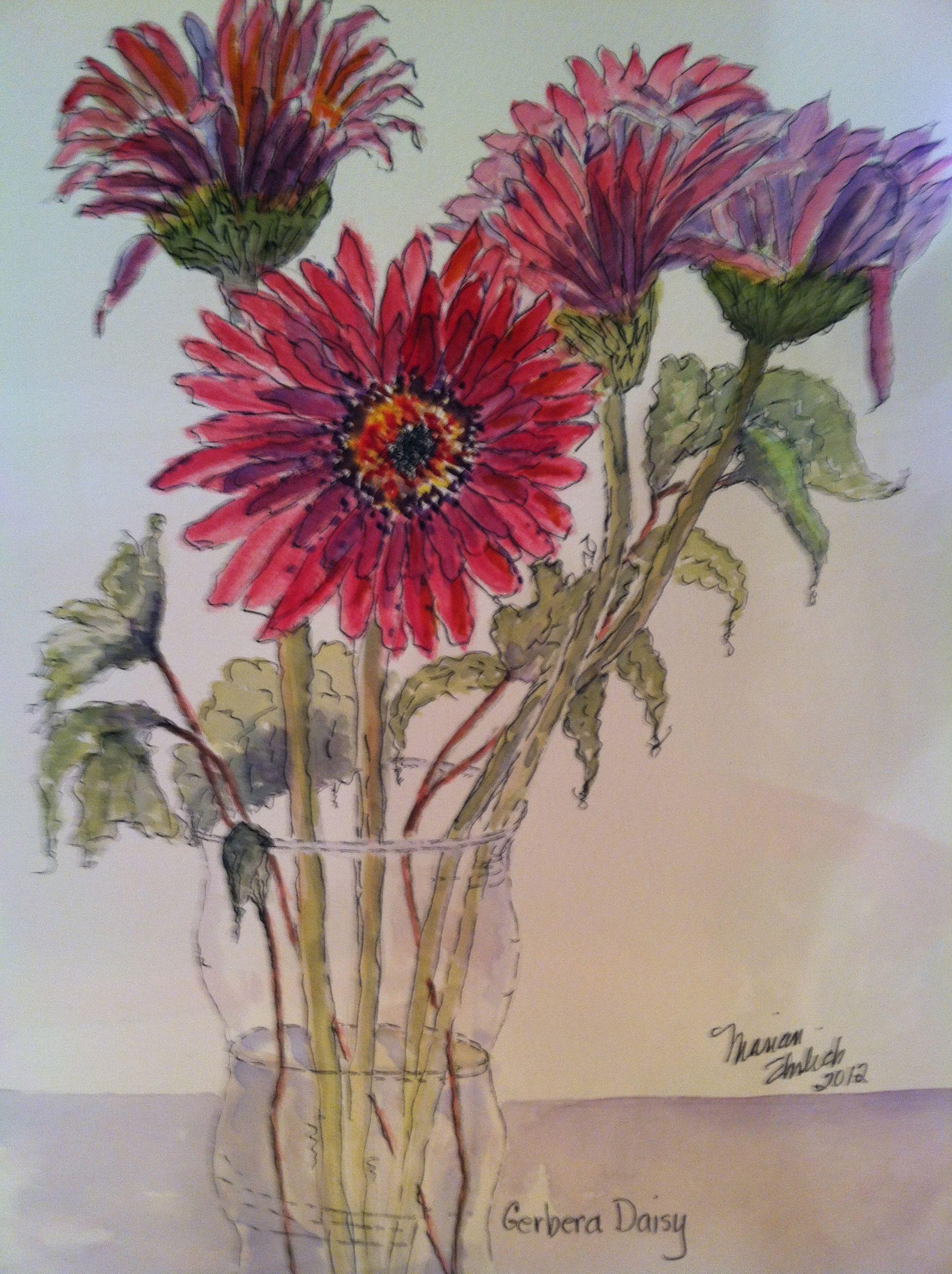 Gerbera Daisy Hot Pink Flower Drawing Gerbera Daisy Gerbera