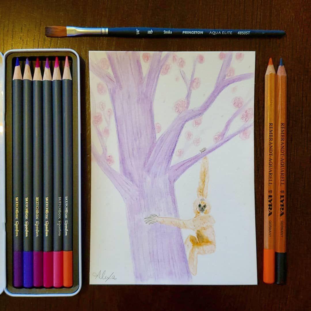 Alexasillustrations Sketchboxmarch Watercolor Color Pencils