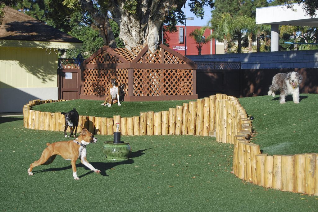 The Bone Adventure   Cat playground outdoor, Dog play area ...