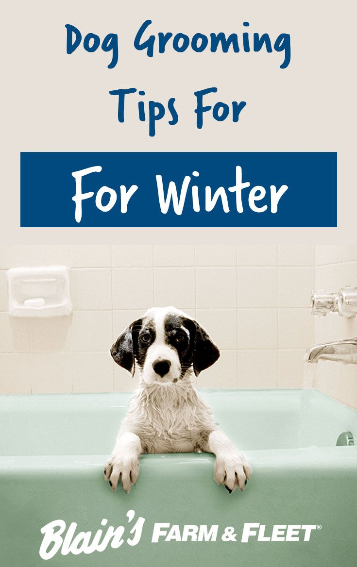 Dog Grooming Tips For Winter Dog Grooming Dog Grooming Tips Dogs