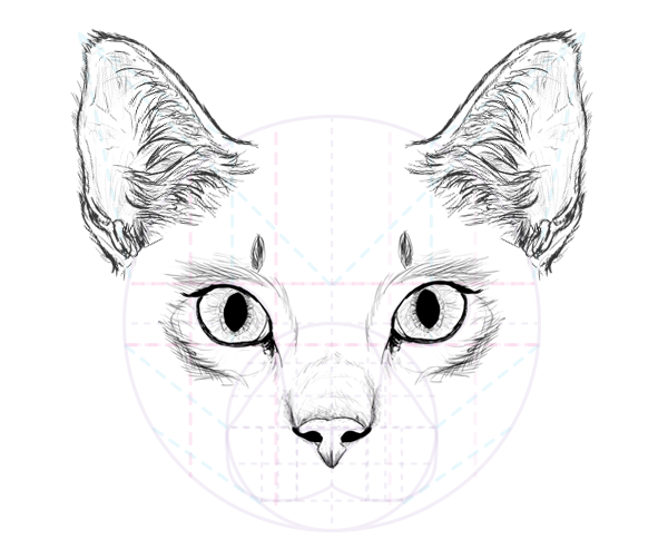 How to Draw Animals: Cats and Their Anatomy - Tuts+ Design ...