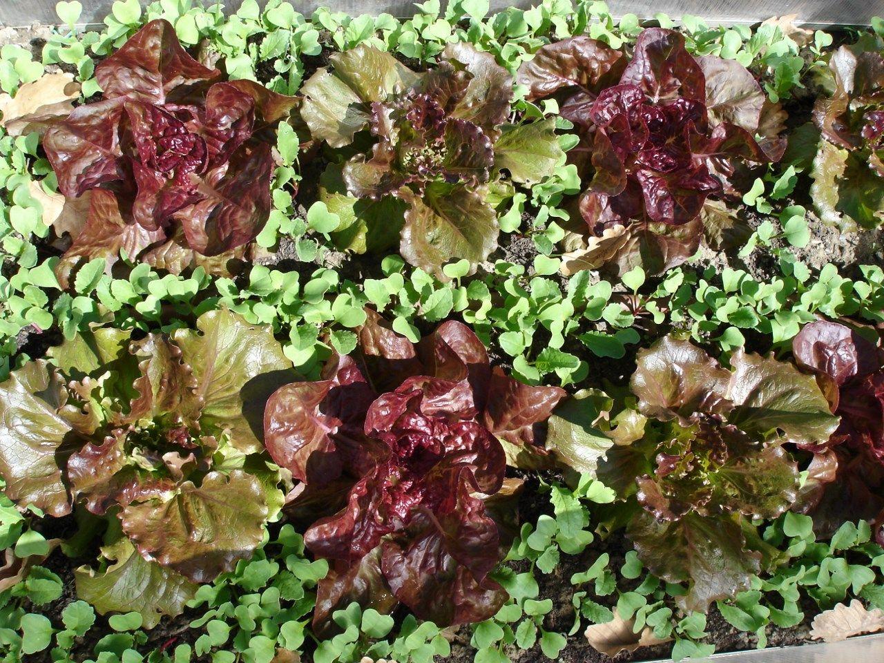 Trois techniques pour faire pousser plus de légumes au ...