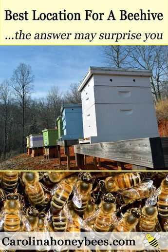 Finding the Best Location for Your Hive - Carolina ...
