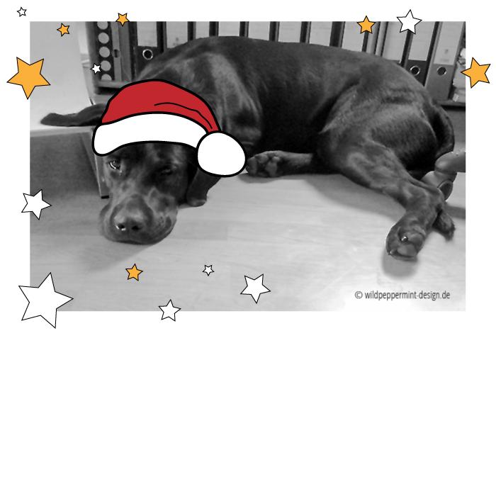 Unser Labrador, Nikolaus, Weihnachts-Hund ;-), schwarz, sw ...