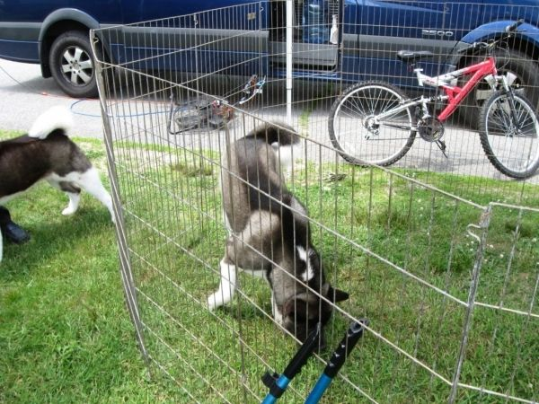 Gorgeous Temporary Fences For Dogs Temporary Dog Fences For