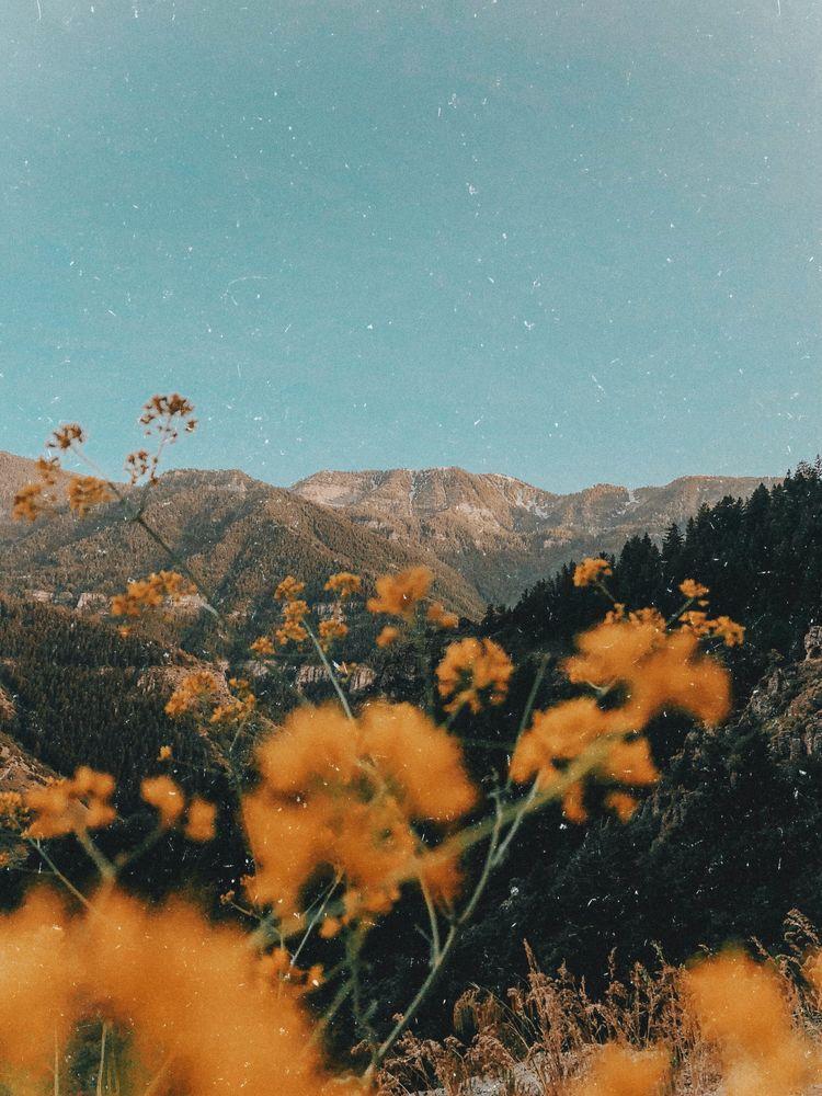 𝑷𝒊𝒏𝒕𝒆𝒓𝒆𝒔𝒕 𝒉𝒐𝒏𝒆𝒆𝒚𝒋𝒊𝒏 Landscape Photography