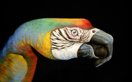 The Most Amazing Animals Painted On Hands Hand Painting Art Body Art Painting Hand Art
